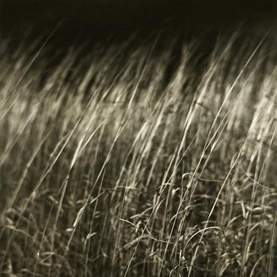 Layered Prairie
