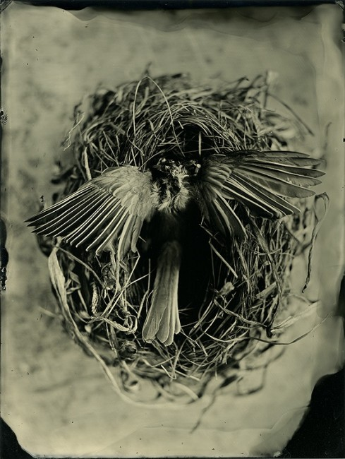 Life and Death - 6x8 collodion on aluminum