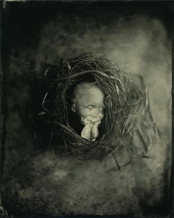 Incubated - 8x10 collodion on aluminum